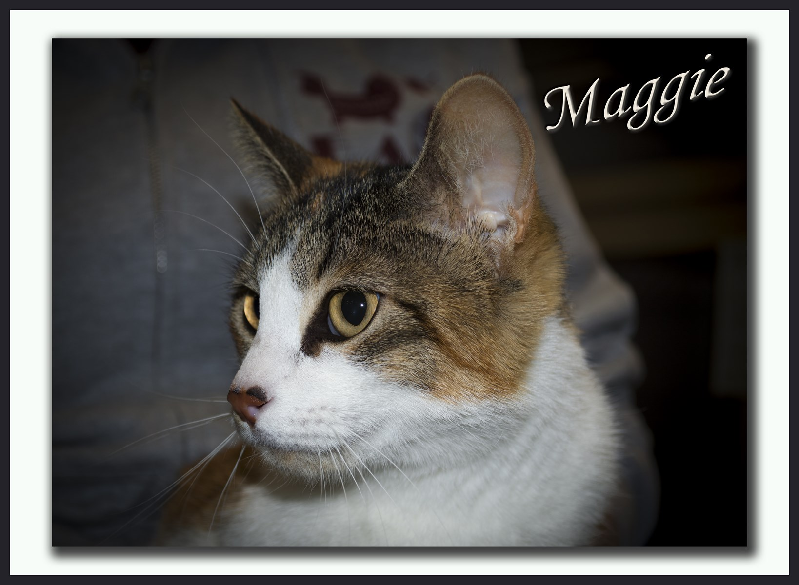 Maggie1+(Copy).jpg