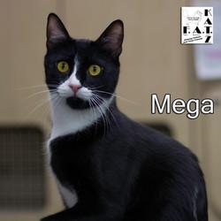 megafaun.jpg