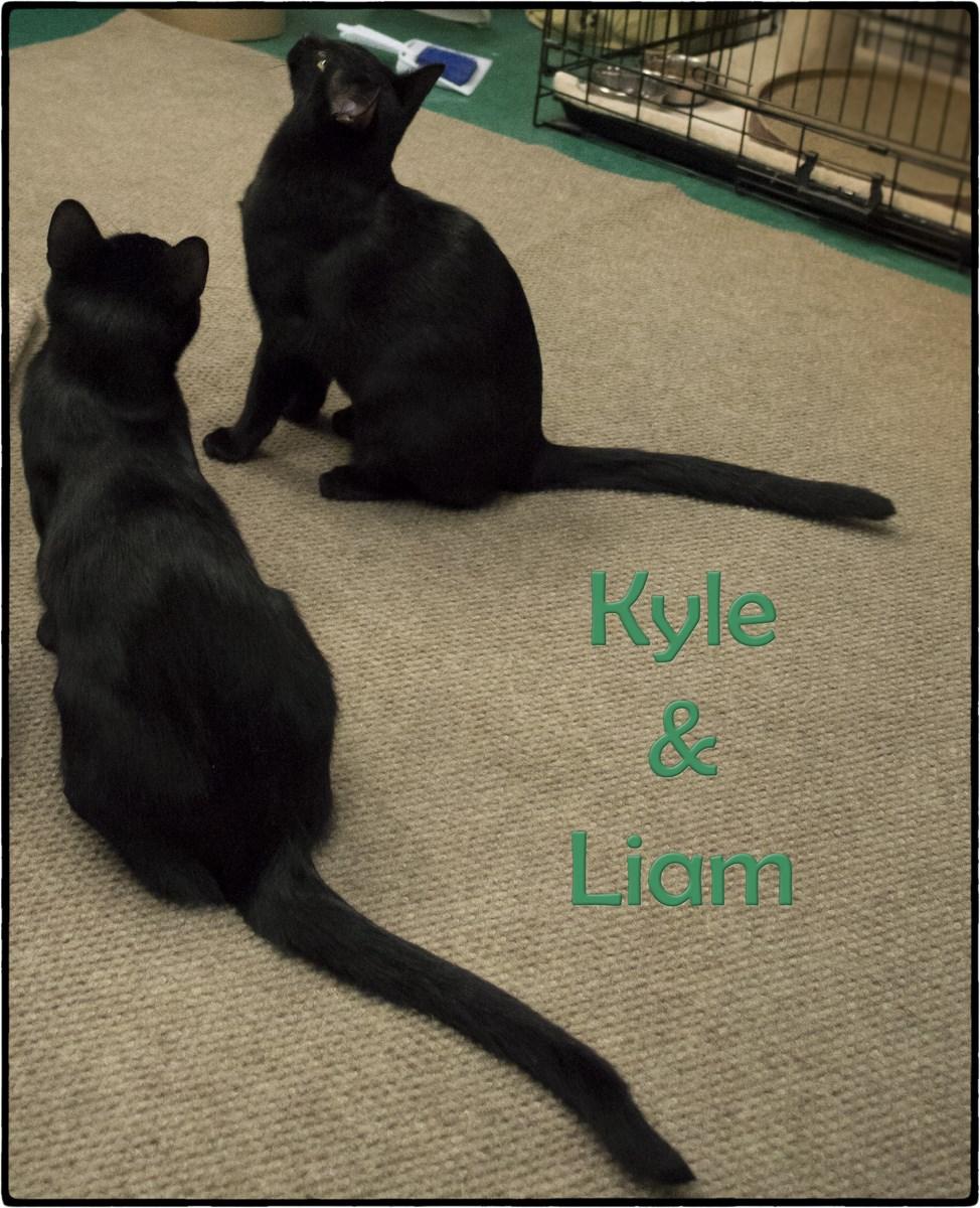 Kyle+&++Liam+(Copy).jpg