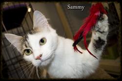 Sammy+border.png