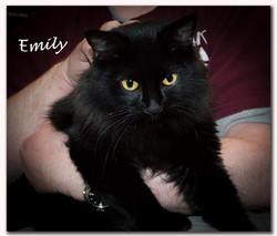 Emily1+(Copy).jpg