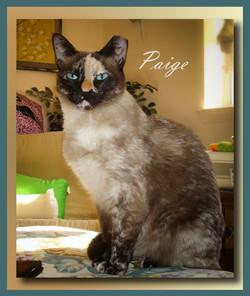Paige1+(2).jpg