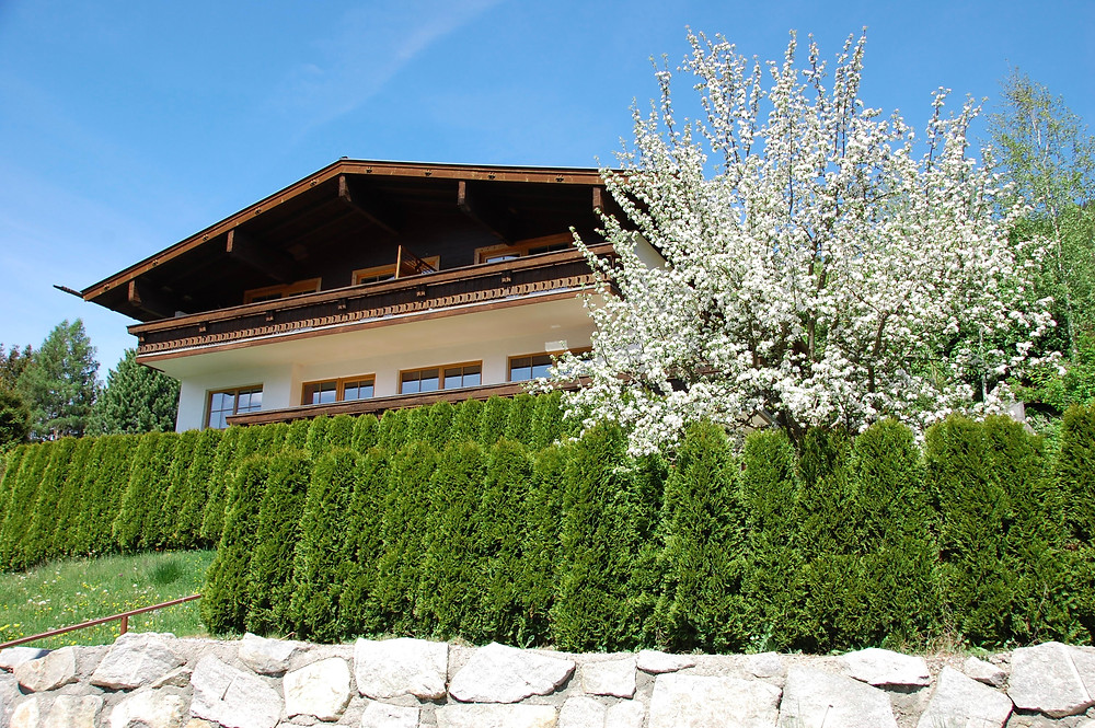 Blossoms in full bloom at the chalet