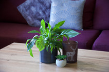 Indoor plants decorate all of the apartments