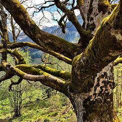 Hiking in the Rauriser Urwald Forest