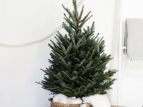 The Big Debate | When should you put up your Christmas tree?