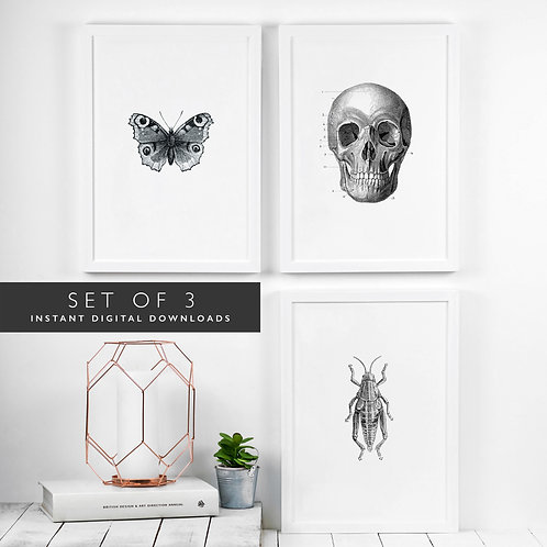 Set of 3 Victorian Gothic Printable Wall Art [DOWNLOAD ONLY]