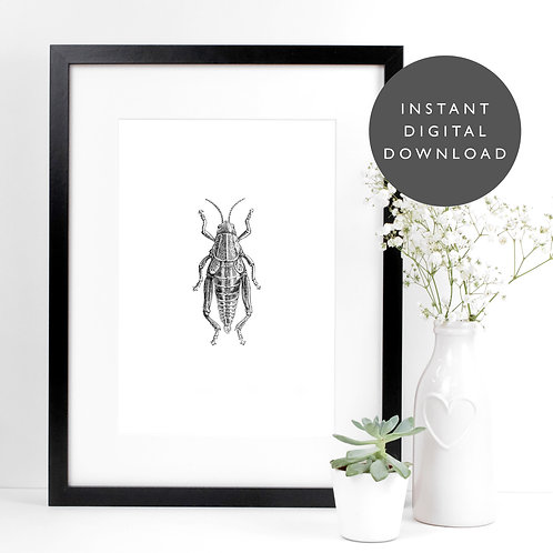 Grasshopper Insect A4 Printable Vintage Wall Art [DOWNLOAD ONLY]