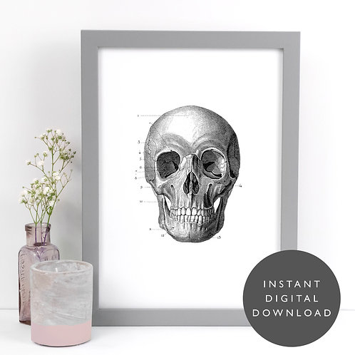 Vintage Skull A4 Printable Anatomical Wall Art [DOWNLOAD ONLY]