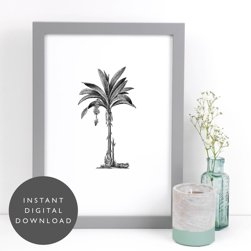 Tropical Palm Tree Vintage Botanical Illustration Printable Wall Art