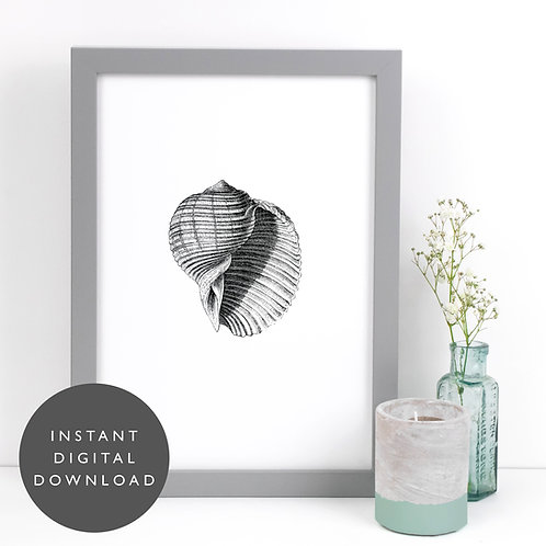 Beach Seashell A4 Printable Bathroom Wall Art [DOWNLOAD ONLY]