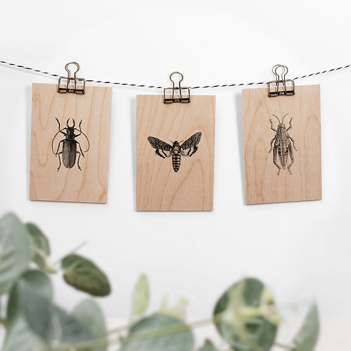 Bugs and Moths Set of 3 Hanging Wooden Signs