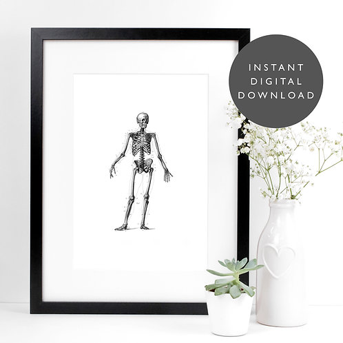 Vintage Skeleton A4 Printable Anatomical Wall Art [DOWNLOAD ONLY]