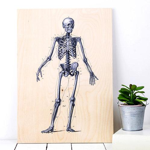 Human Skeleton | Wooden Anatomy Print