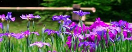 Zet mee de bloemetjes buiten en steun onze Ouderraad!