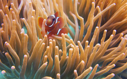 Nemo lightroom-