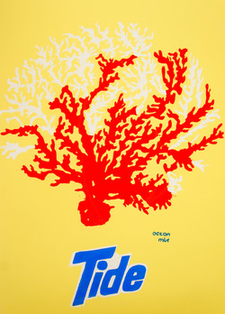 tide coral-02112