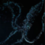 Firefly Squid.jpg