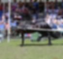 TGL Farms - CHRSTIAAN - Friesian Horse