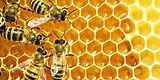Bees-for-Test.jpg