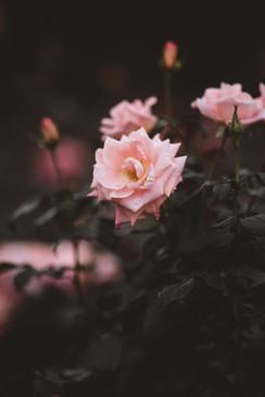 Violet Carson -バイオレット・カーソン-