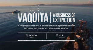 Two video producers caught wind of a story off the coast of Mexico, where a thriving black market for fish bladders for China was pushing a species of tiny porpoise to the brink of extinction.   My role was to promote the content across social channels, creating an Instagram stories strategy in collaboration with the video producers and a designer to cut different social videos and images that would tell the story over 3 weekends, brainstorming hashtags and crafting the accompanying narrative.   The result:  4 Facebook posts generated 98,000 views, 191 shares, 894 reactions 3 Twitter posts generated 144 RTs and more than 18,000 views 2 Instagram posts generated 22,476 views  Instagram stories strategy was rolled out over 3 weekends to match the 3 chapters of the series The result: Impressions on the first slide of the first story totaled 13,000-14,000 with swipe throughs to the landing page between 400-500