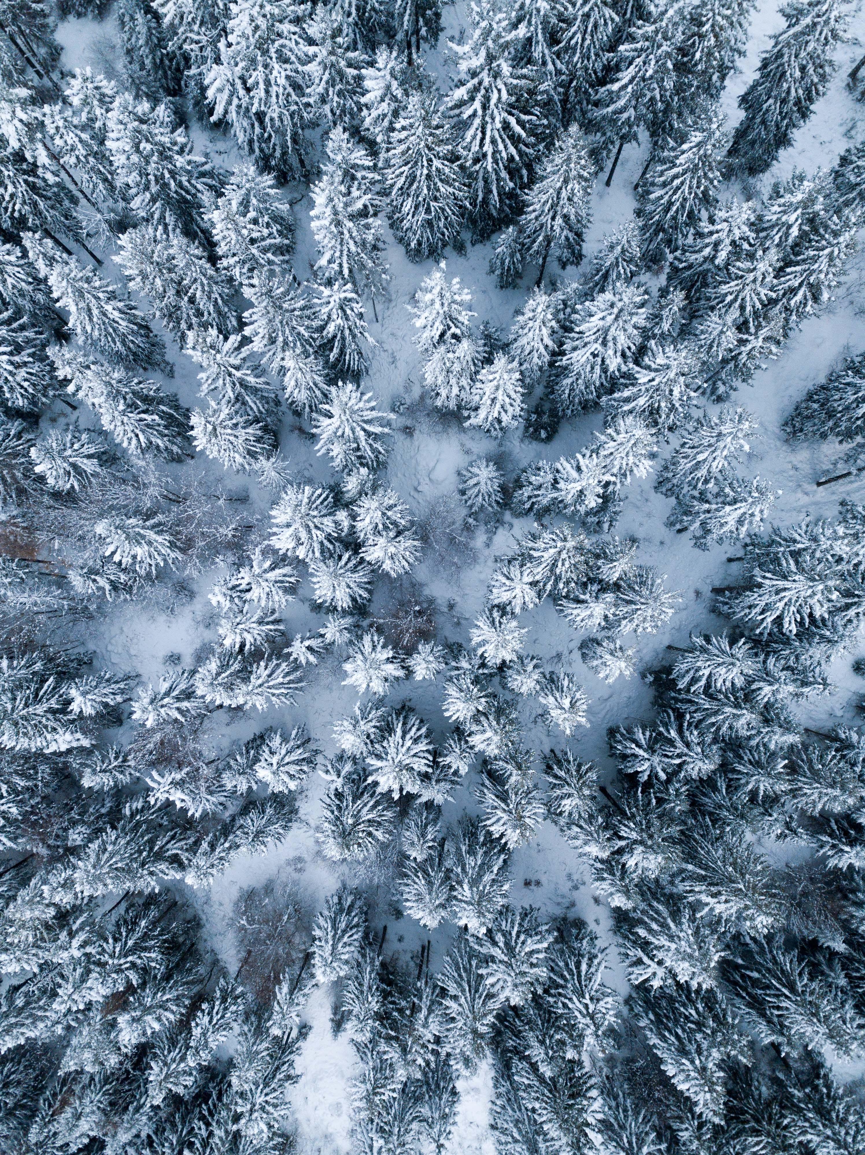 02 - Vue aérienne Forêt en hiver