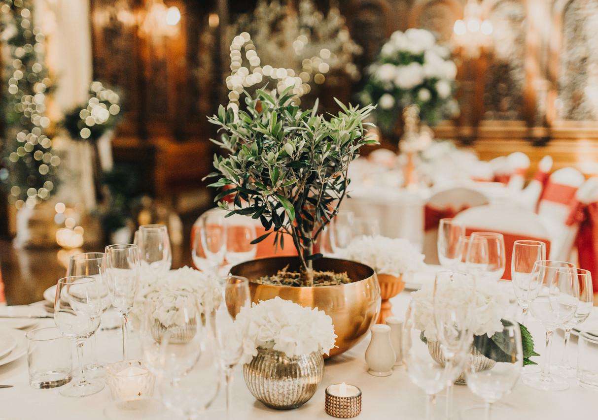 Mini table top Olive trees