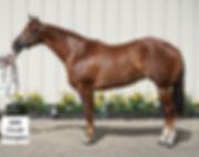 Bronze Classic Circuit Award horse.jpg