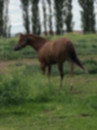 fb pasture.jpg