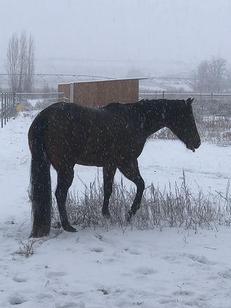ida snow jan.jpg
