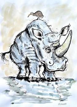 Kiwi on rhino