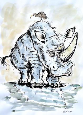 Kiwi on rhino.jpeg