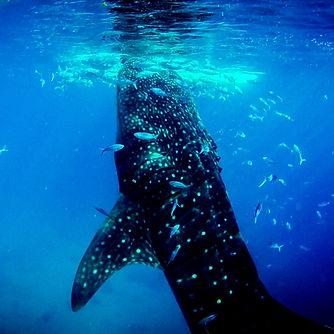 whalewhalewhalelookwhatwehavehere.jpg