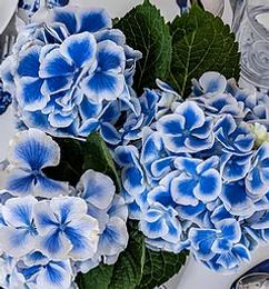 Grateful Blue Flower Scene