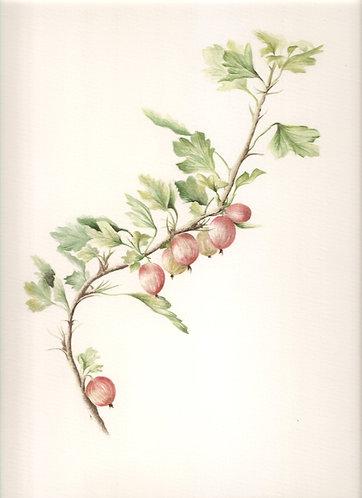 Grooseberry