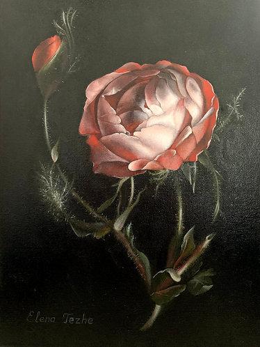 Still life with rose