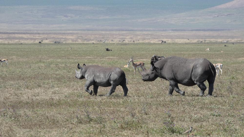 NgorongoroRhino_edited