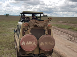 CheetachAikaTanzania