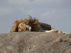 Napping Tanzania