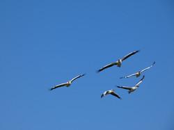 Birds Tanzania