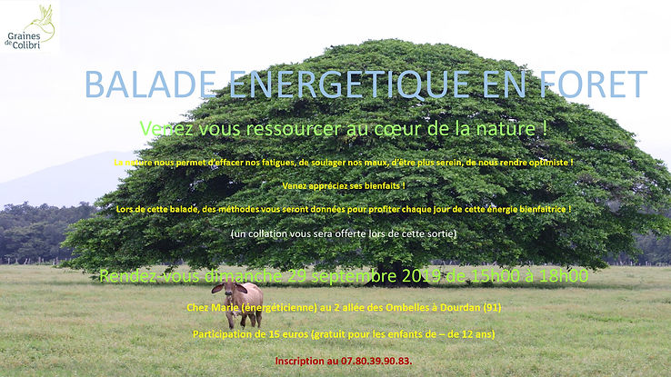 balade-energetique-en-foret-en-septembre