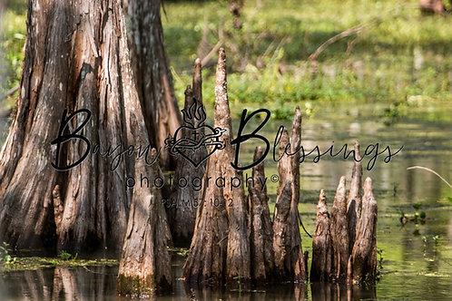 Swamp of Plenty