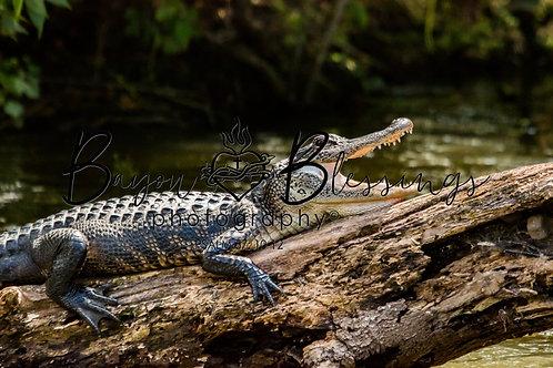 Gator Cooling