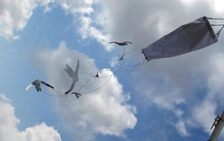 Flying in the wind (2020)