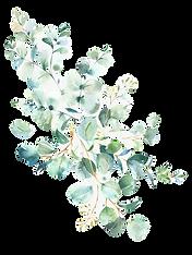565-5659315_grey-eucalyptus-leaves-weddi