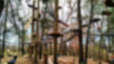 ASHEVILLE TREE TOPS.jpg