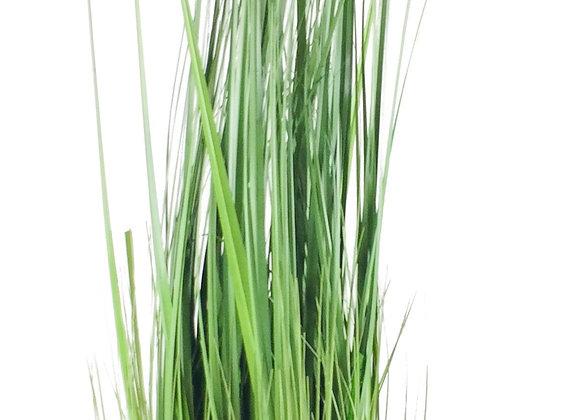 Onion Grass With Pot 113cm