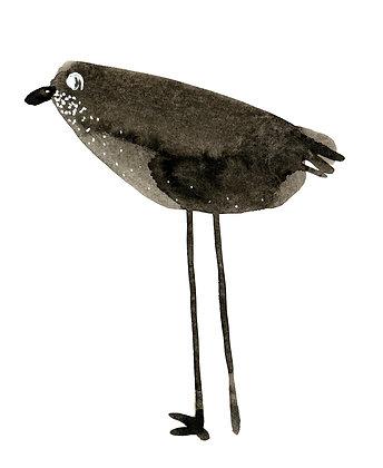 Bird N2