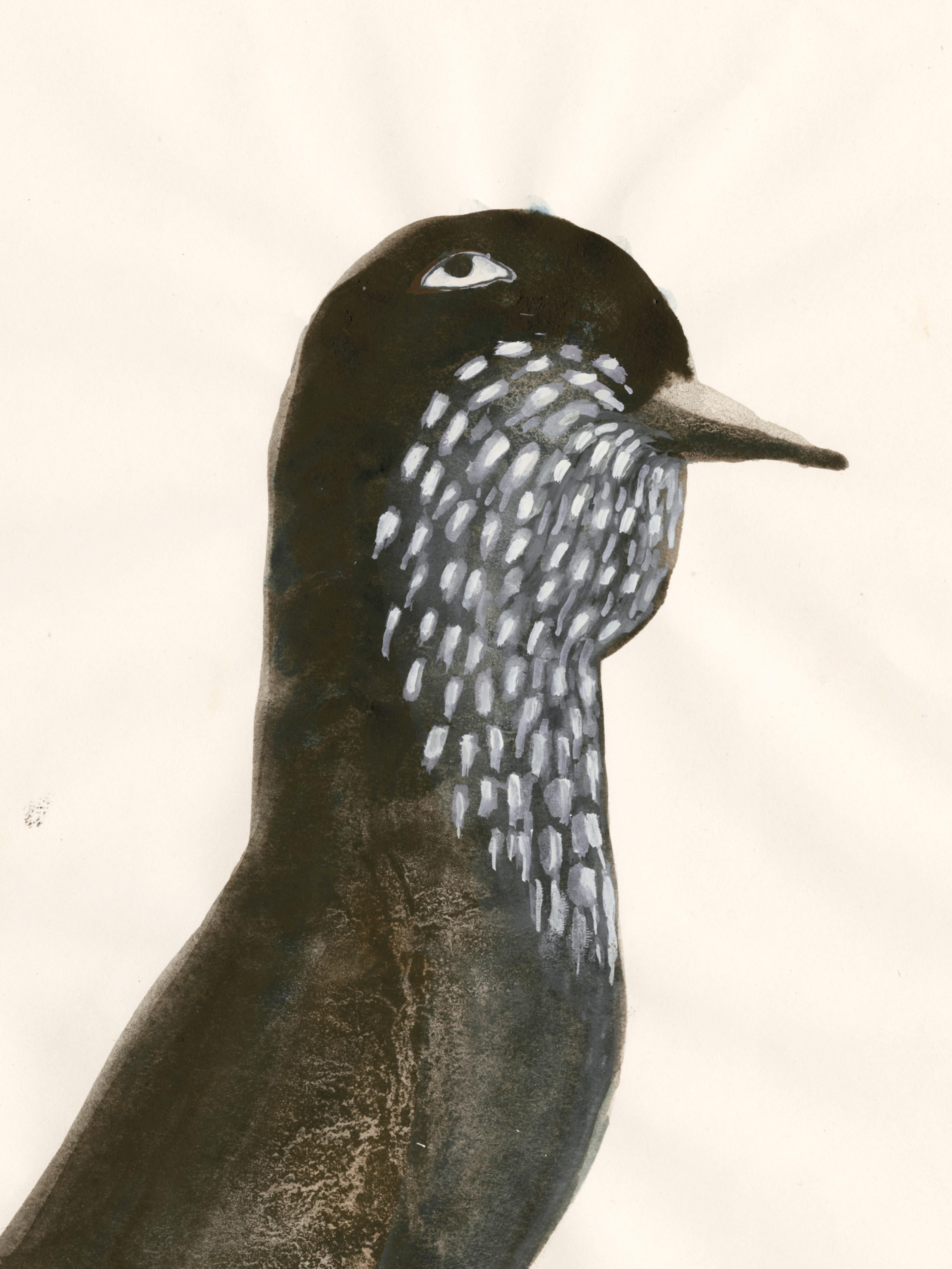 Bird N5